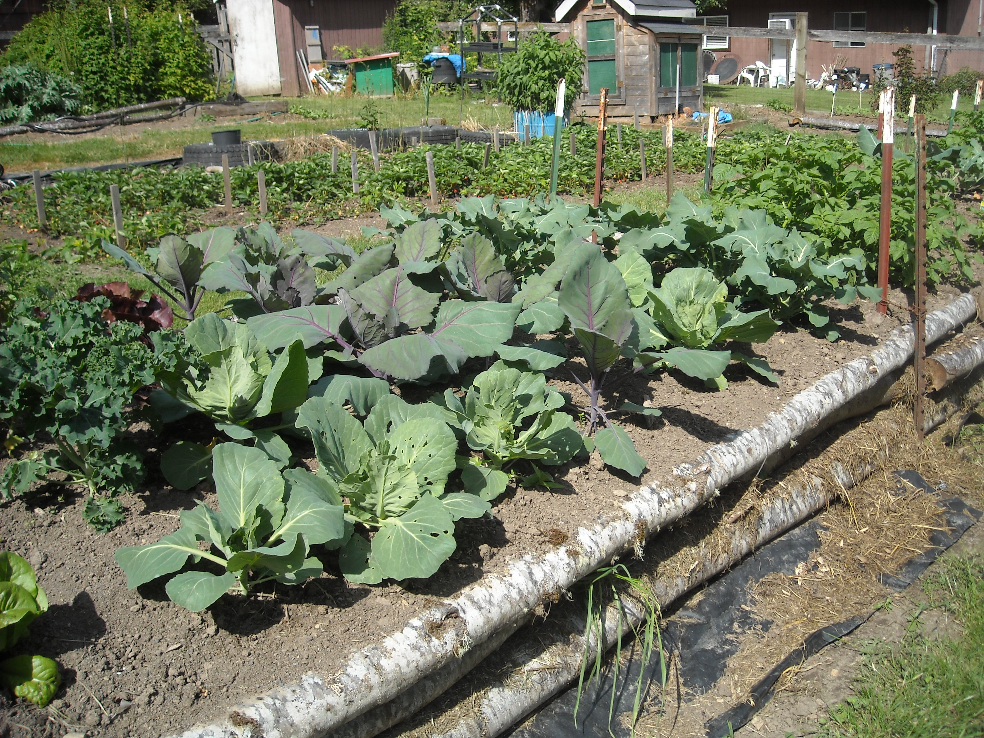 how to organically prepare garden soil for growing heavy