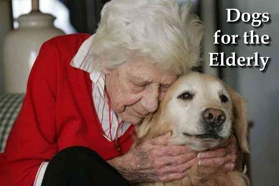 Dogs for the elderly