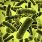 bacteria infections and symptoms