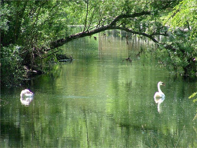 peaceful-swanney-river