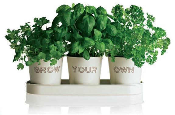 Grow Your Own Herbs Diy Alternative